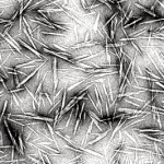 whiskers-cellulose-ramie